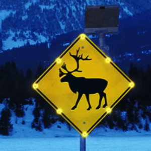 Wildlife Warning
